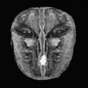 Discography – MSQ Modern String Quartet